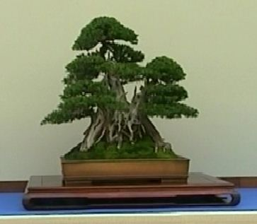 I Prefer To See Trees Of This Size And Style, Exhibited On Tables That  Appear To Have A Connection With Or Are U201cgrowingu201d Out Of The Display Bench.